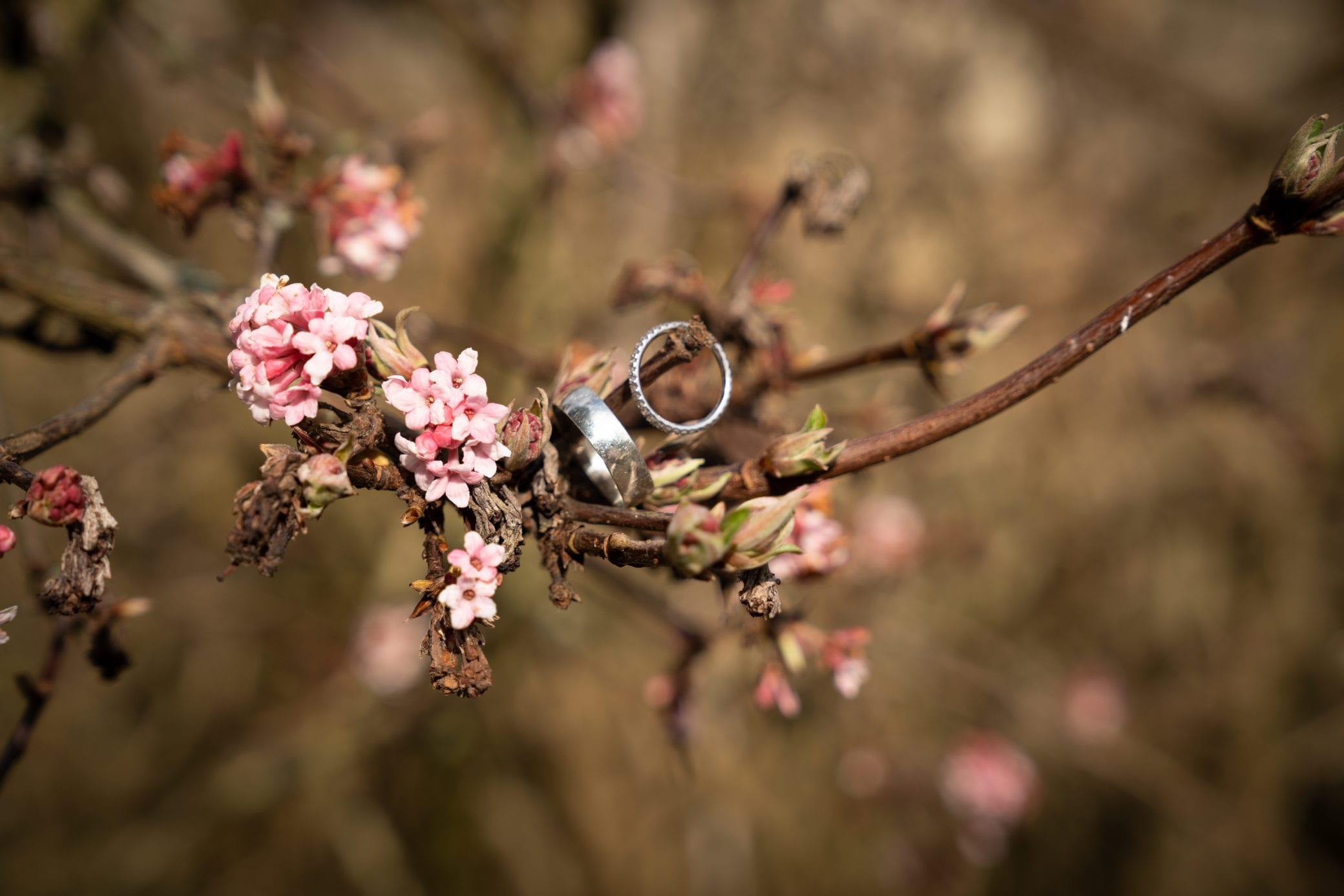 Wedding rings shown at a spring wedding at Farnham Castle